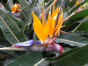 Bird of Paradise vegetarisch